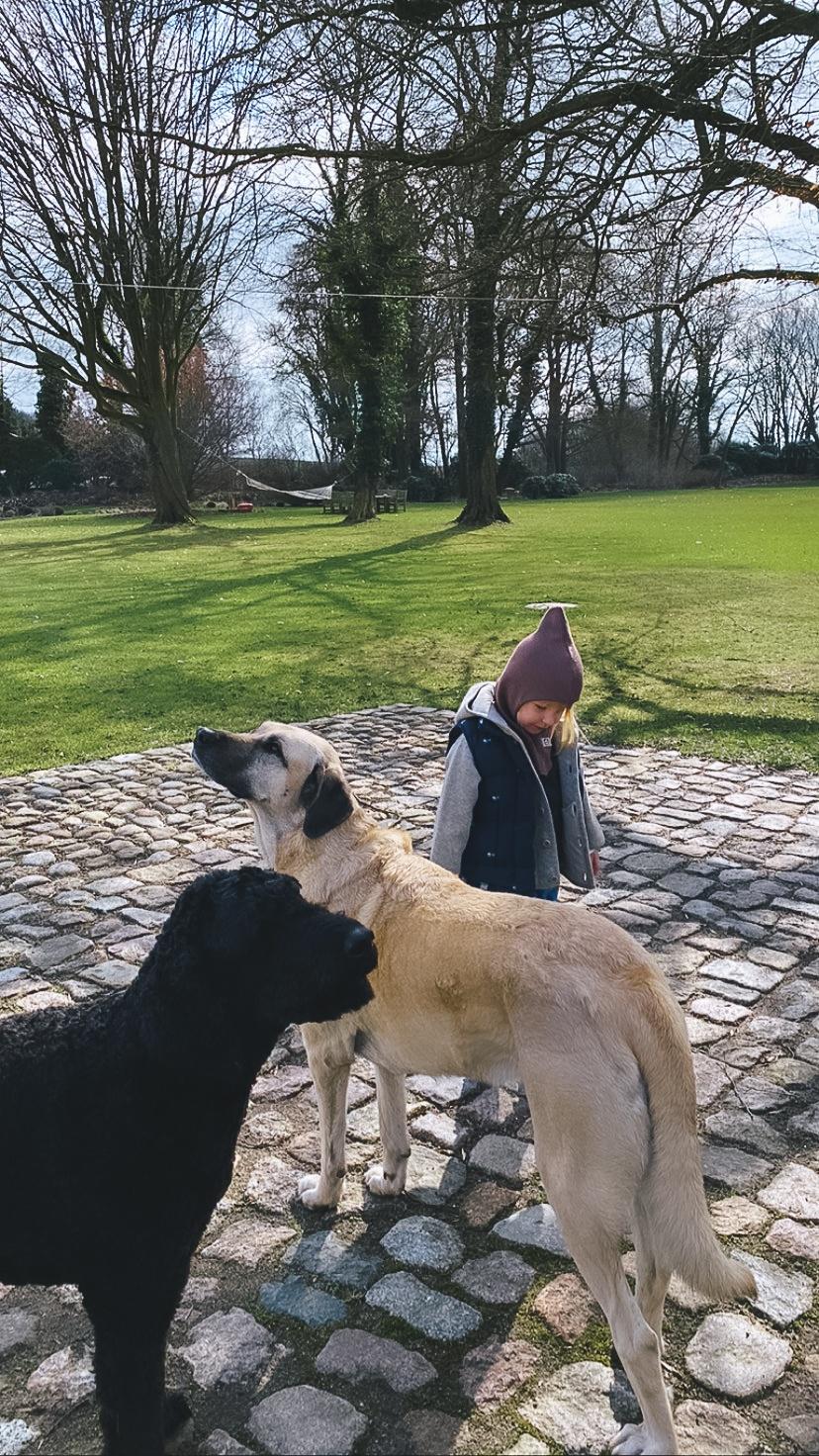 Die Haushunde Ingwer und Teshi